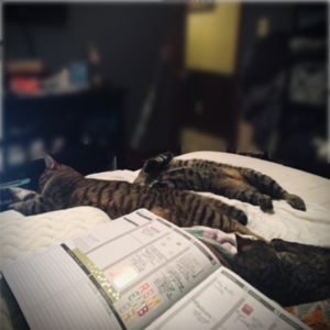 #authorcats #planneraddict